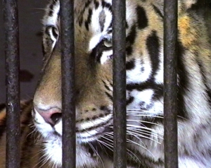 © Donatella Landi, Le Déjeuner sur l'herbe: Zoo 1993-2009 (detail), 2009